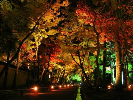 Landscape Lighting : Color and Texture