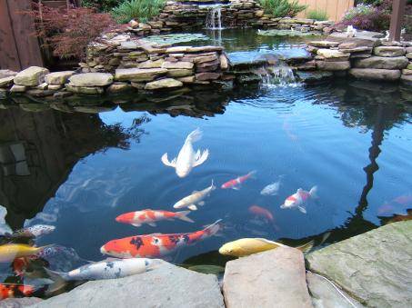 Water Features Koi Ponds Waterfalls Fountains Urn Installation Service